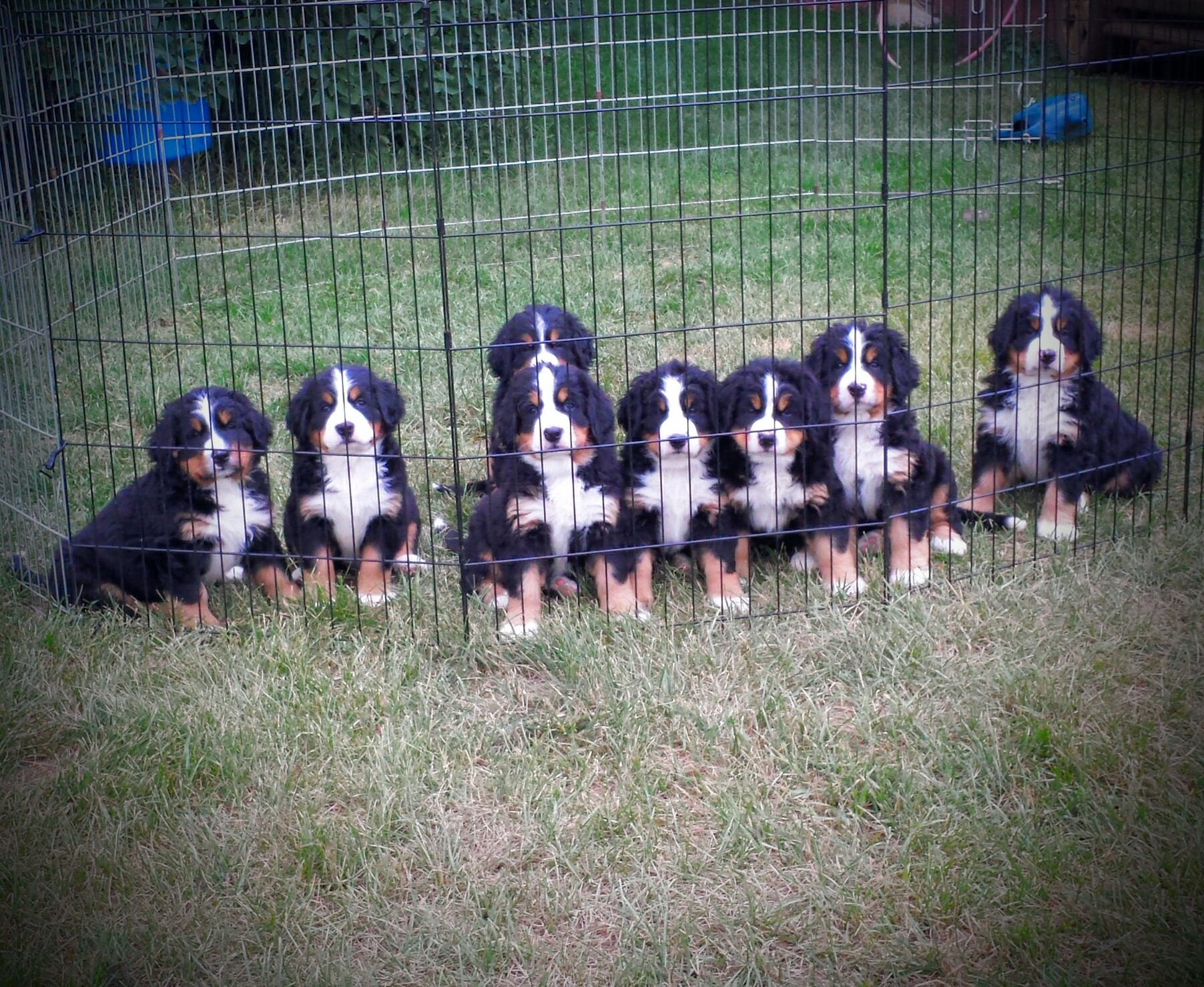 Here are a litter of Buster's pups.